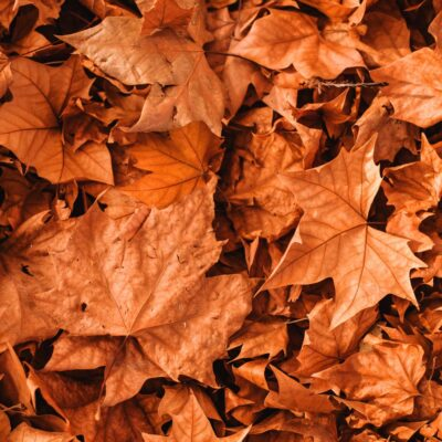 October Favorites: 5 Fall Feel-Goods I Love